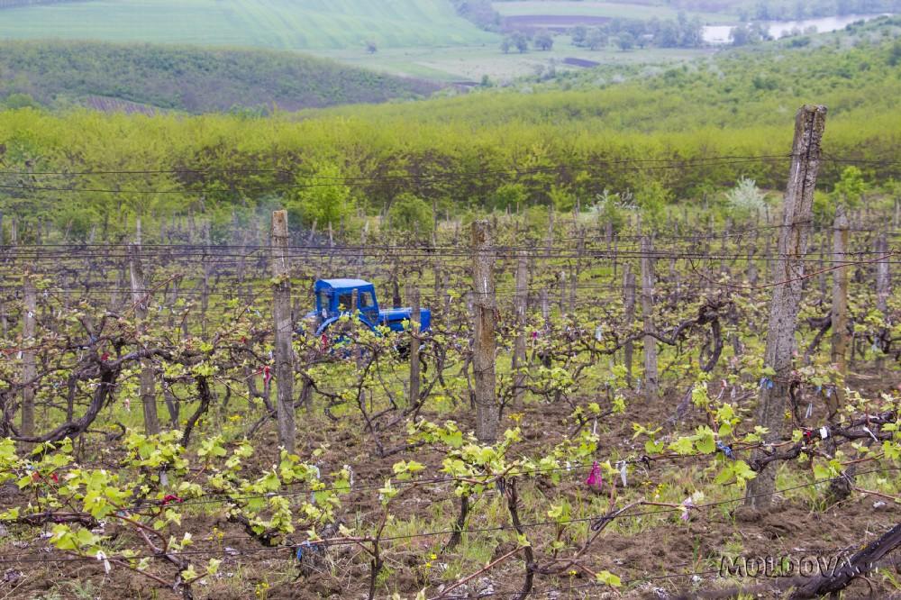 Почему молдавские сельхозпроизводители не страхуют свою продукцию?