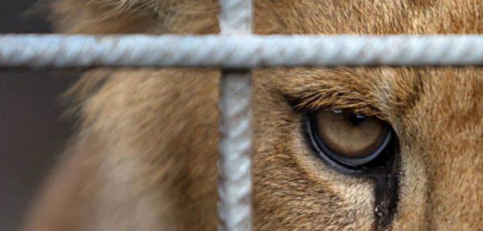 Видатковий матеріал: тварини на продаж